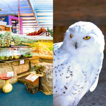 Discovery center and Zoo with owl