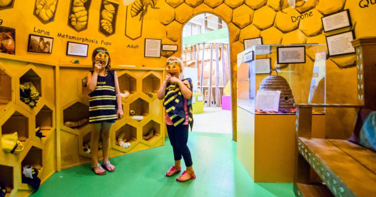 Field Trips to The Discovery Center of the Southern Tier