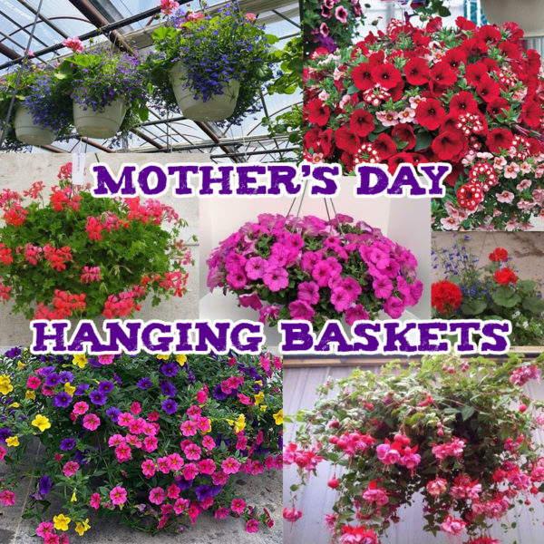 Mother's Day Hanging Basket Sale