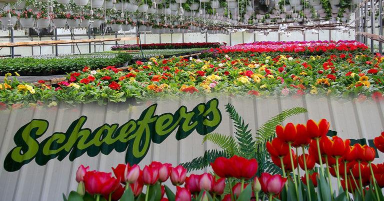 Schaefer's Gardens Hanging Baskets